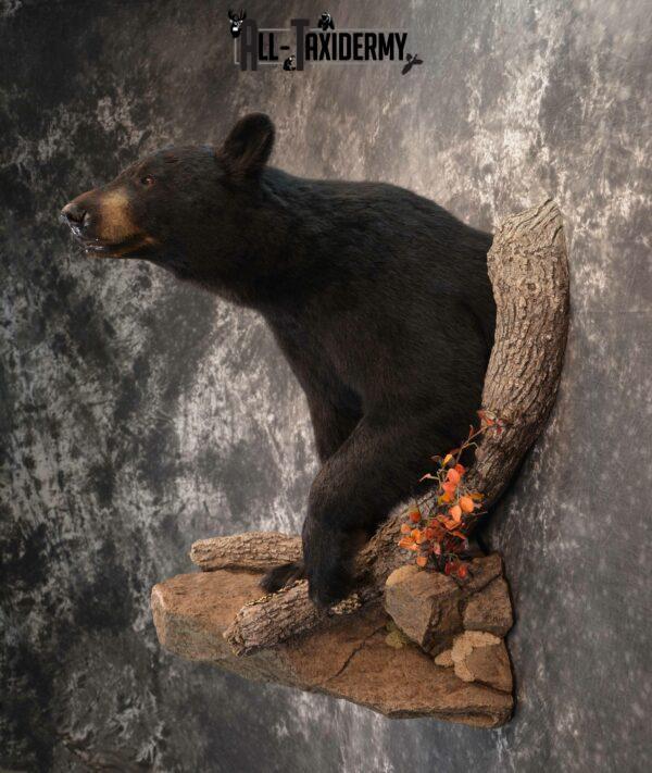 Mounted Black Bear