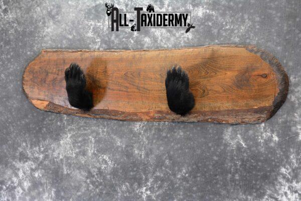 black bear paw mount