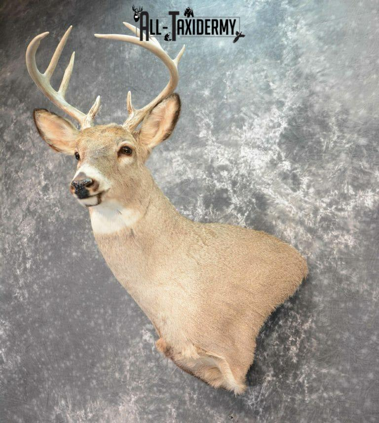 full sneak deer mount