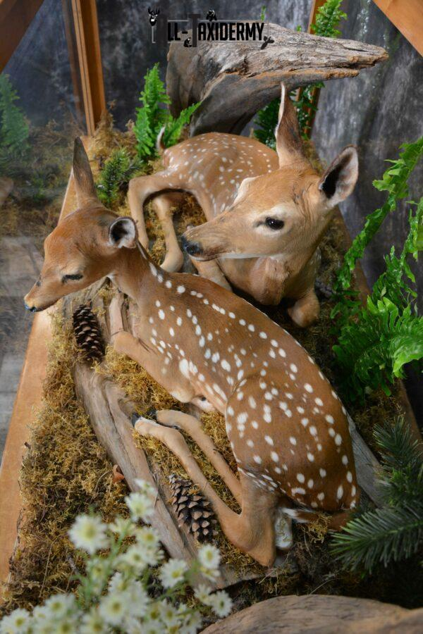 pair of Fawn mount