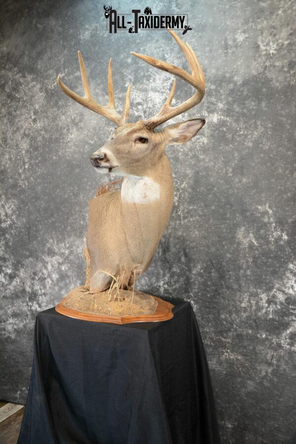 whitetail deer pedestal mounts