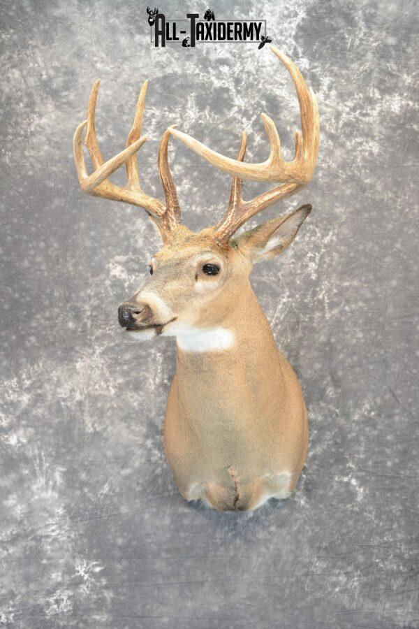 whitetail deer shoulder mounts