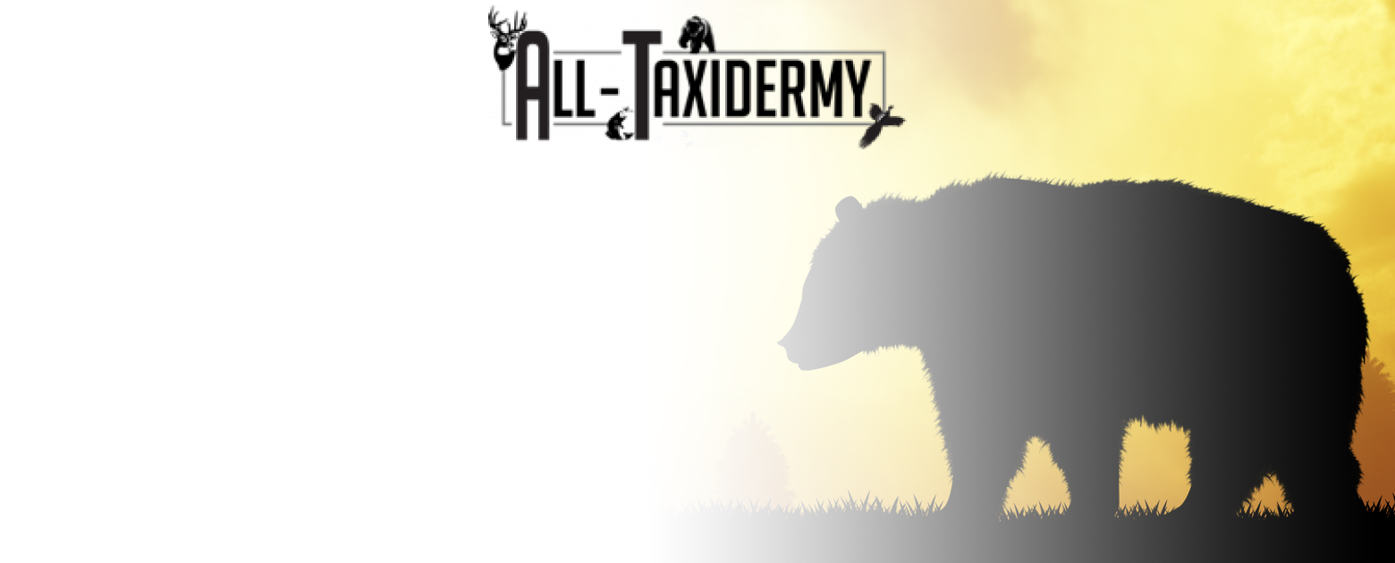 All Taxidermy Slide