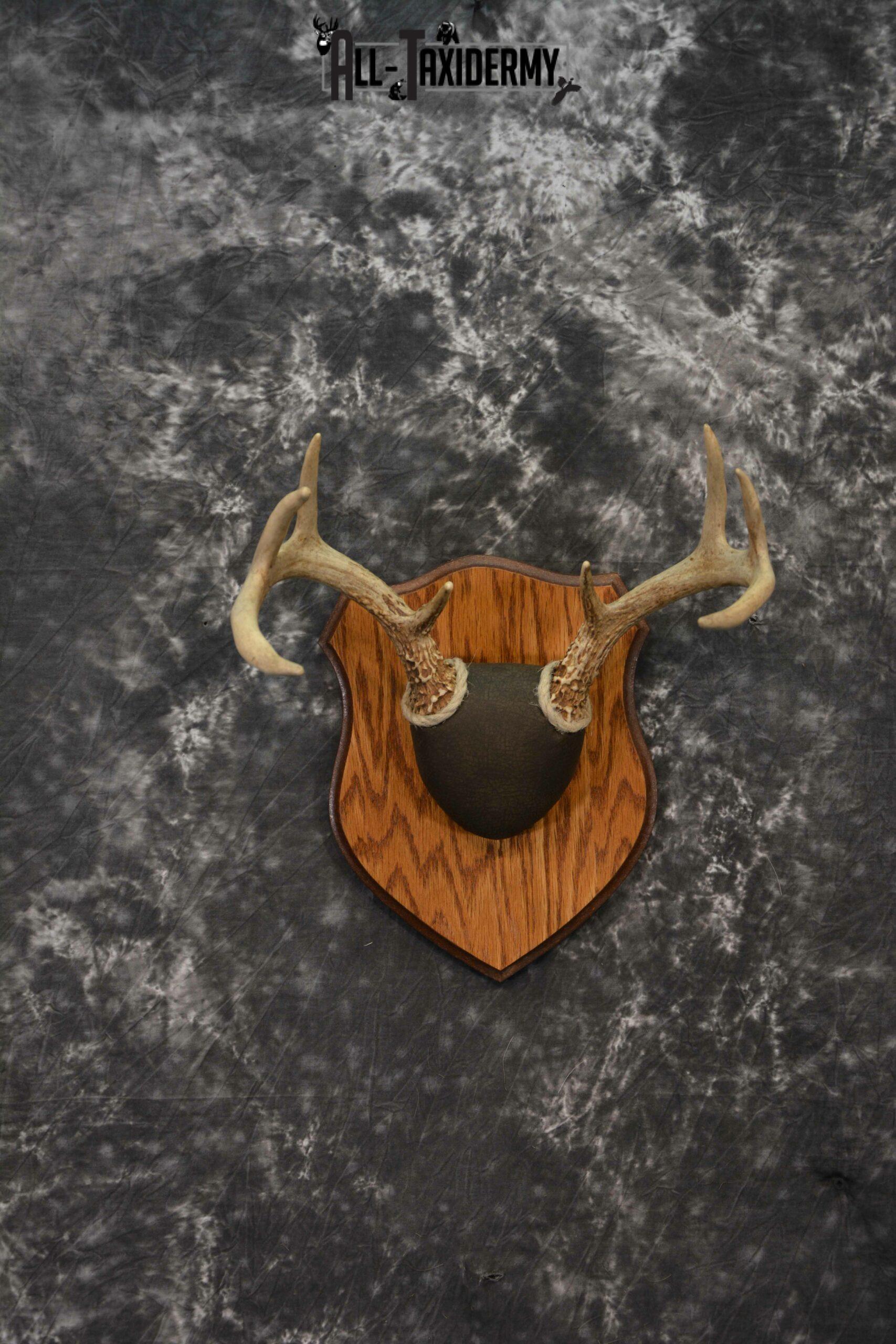 Whitetail antler base plaque for sale SKU 1225