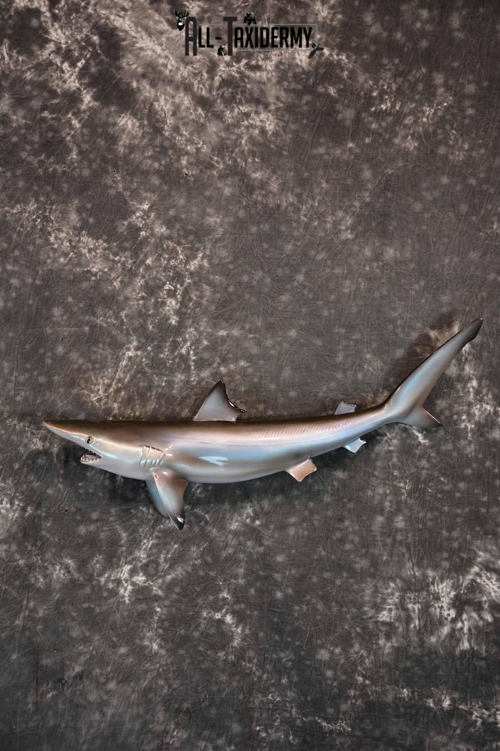 Sand Tiger Shark Replica Taxidermy Mount for Sale SKU 1303