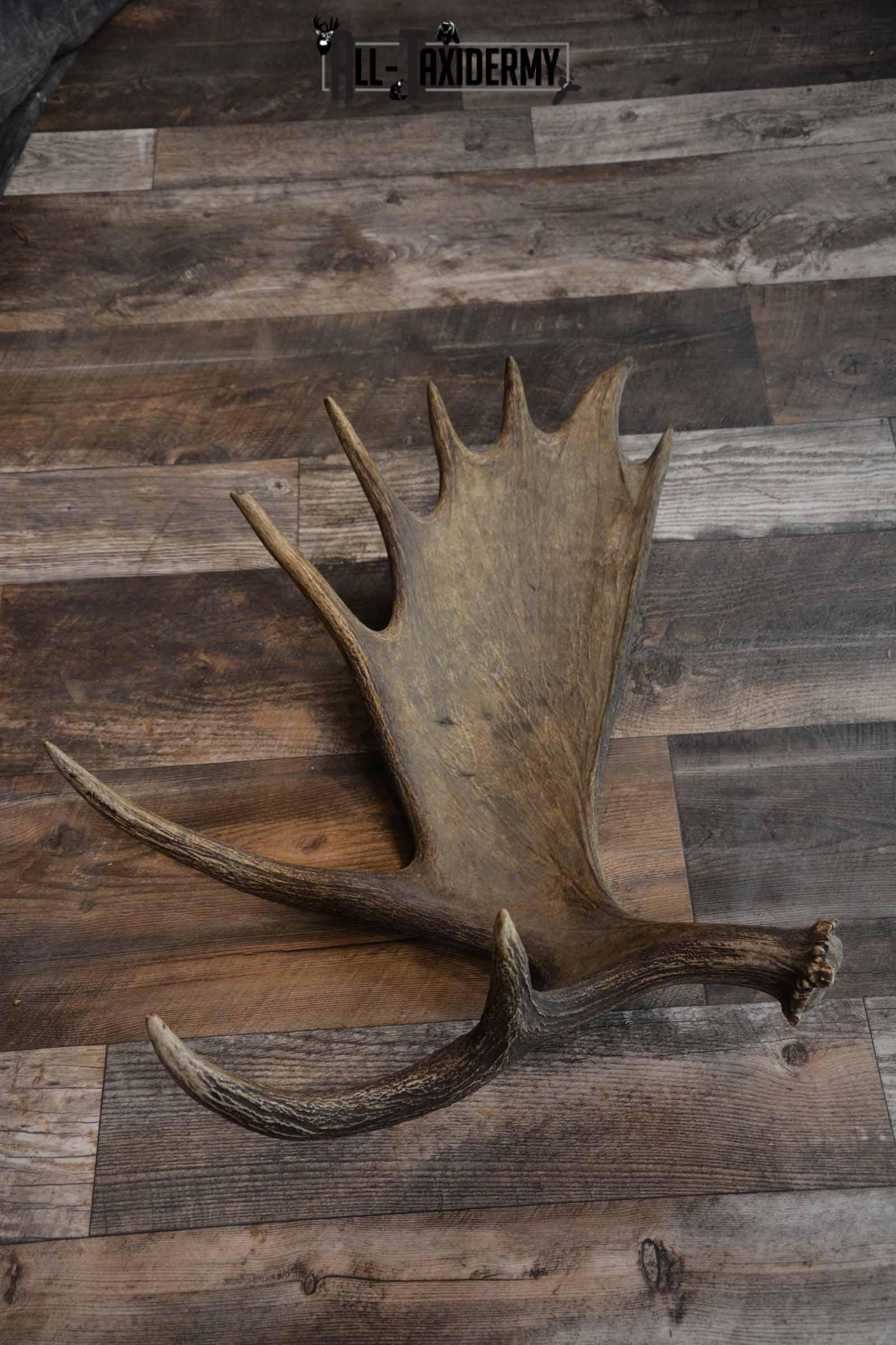Moose Shed for Sale SKU 1272