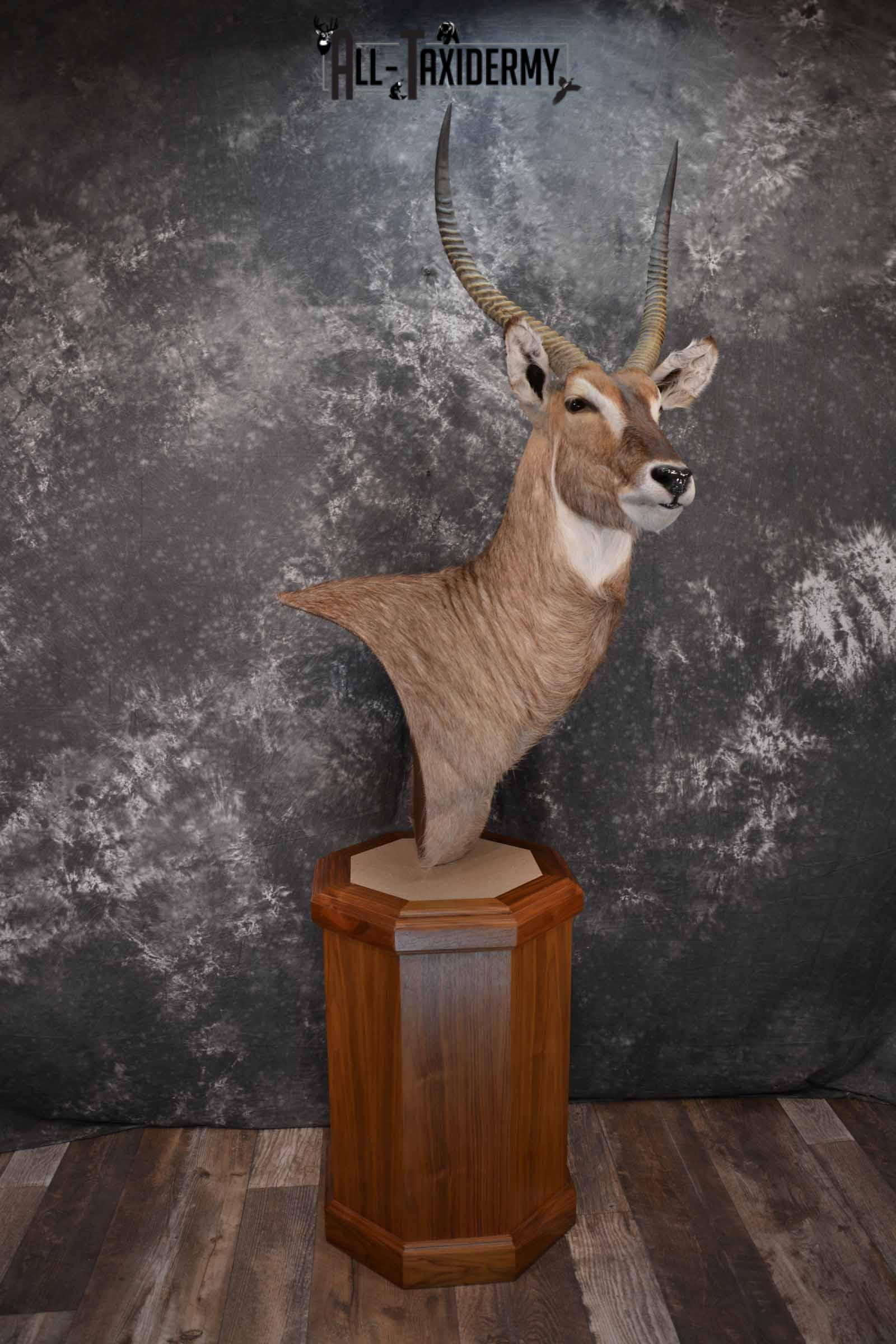 African Waterbuck Floor pedestal SKU 1369