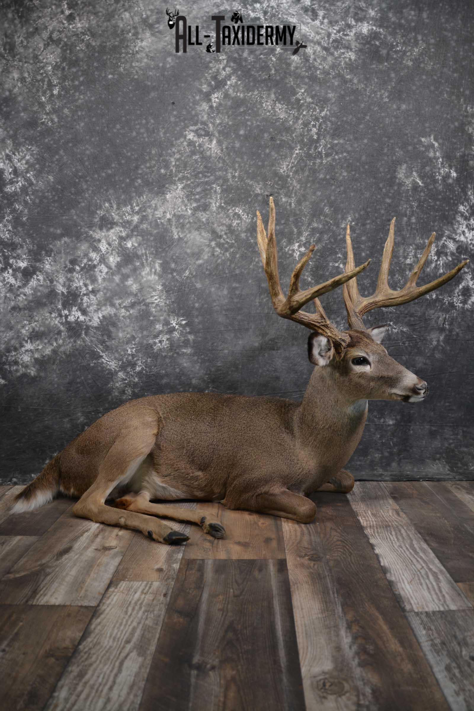 Whitetail Deer Life Size Taxidermy Mount for sale SKU 1446