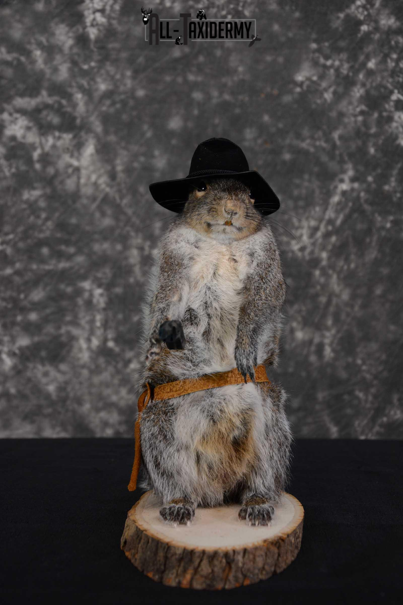 Gray Squirrel taxidermy cowboy novelty for sale SKU 1633