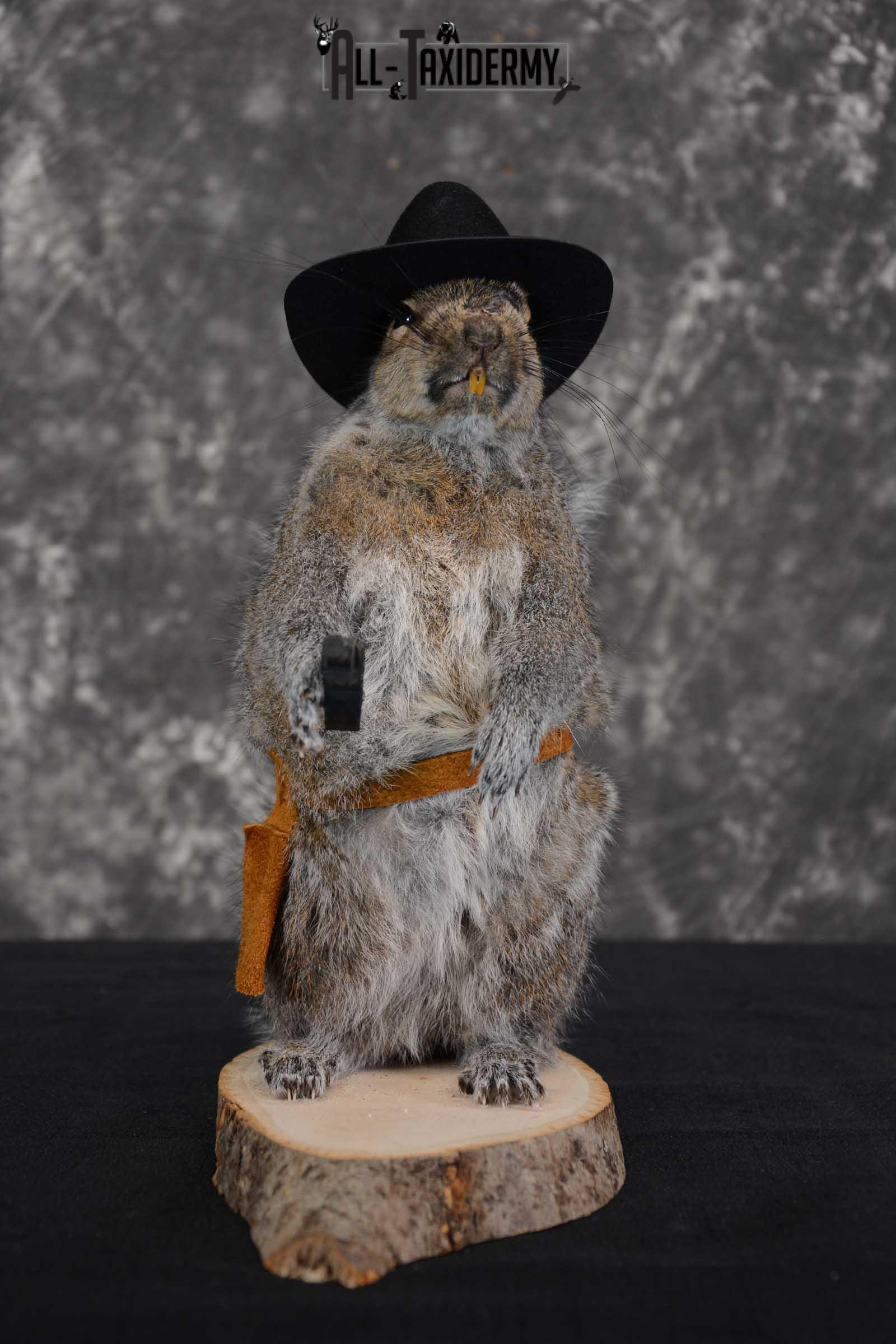 Gray Squirrel taxidermy cowboy novelty for sale SKU 1634