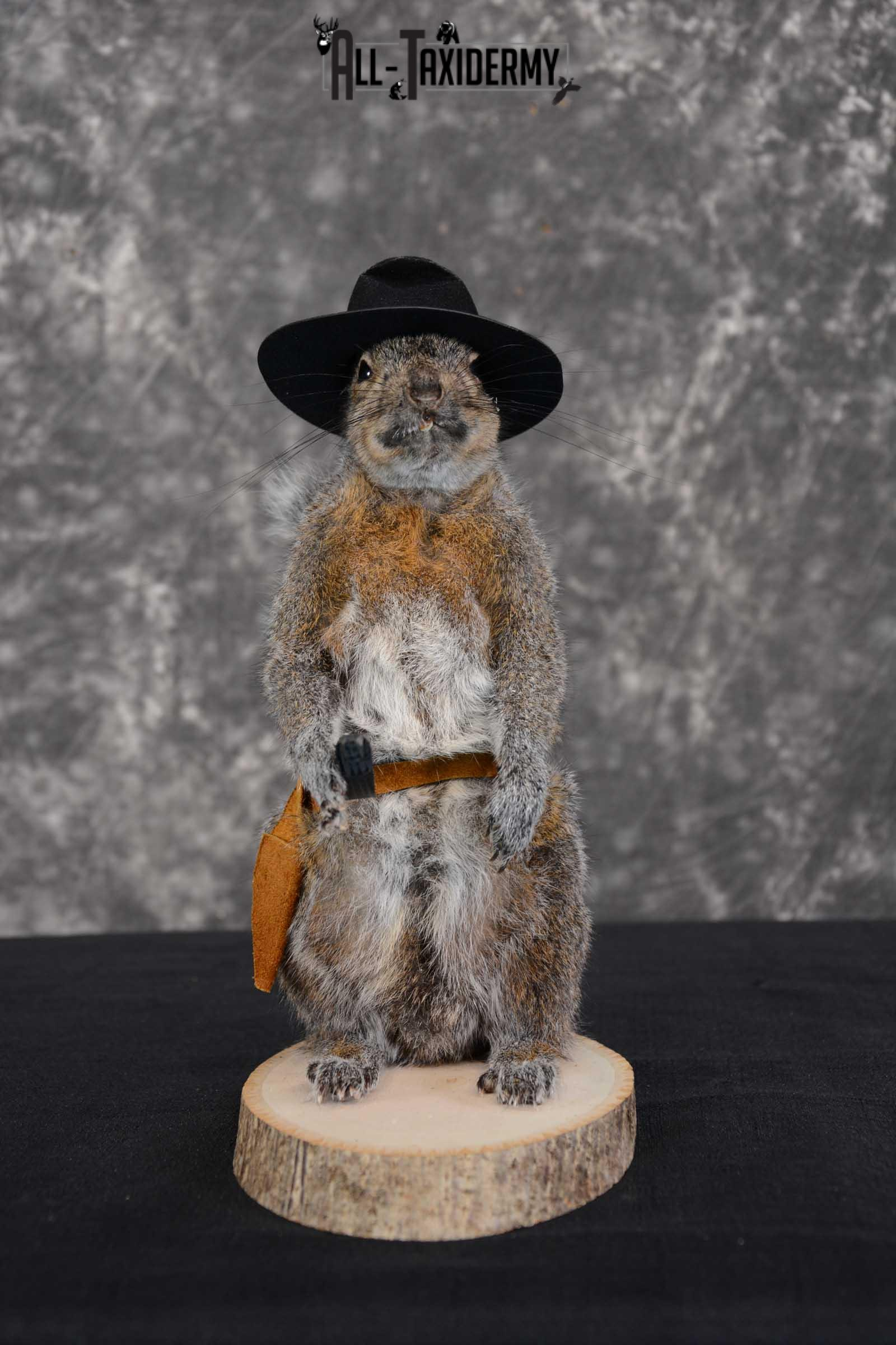 Gray Squirrel taxidermy cowboy novelty for sale SKU 1635