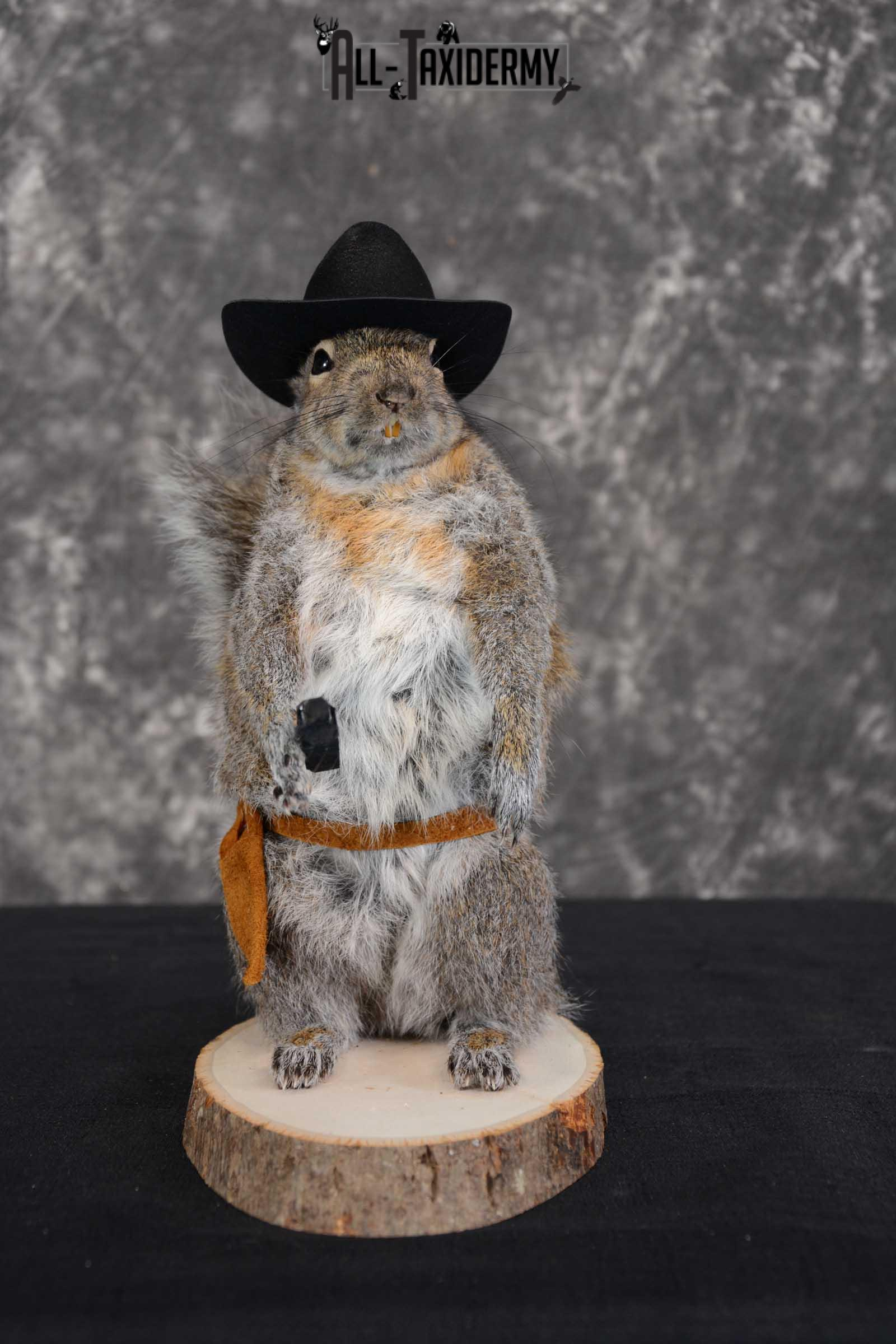 Gray Squirrel taxidermy cowboy novelty for sale SKU 1636
