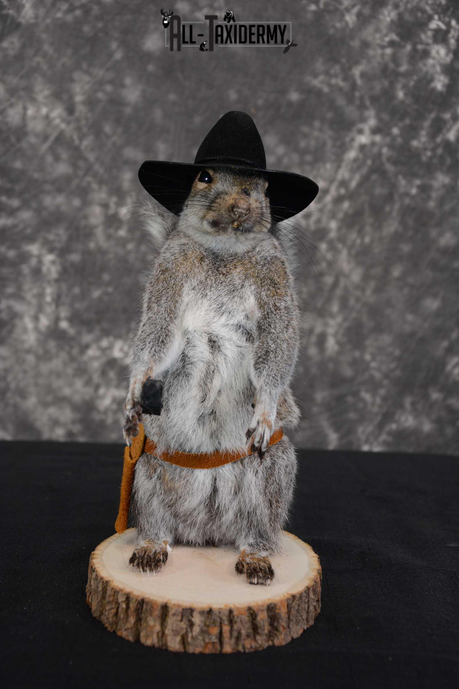 Gray Squirrel taxidermy cowboy novelty for sale SKU 1638