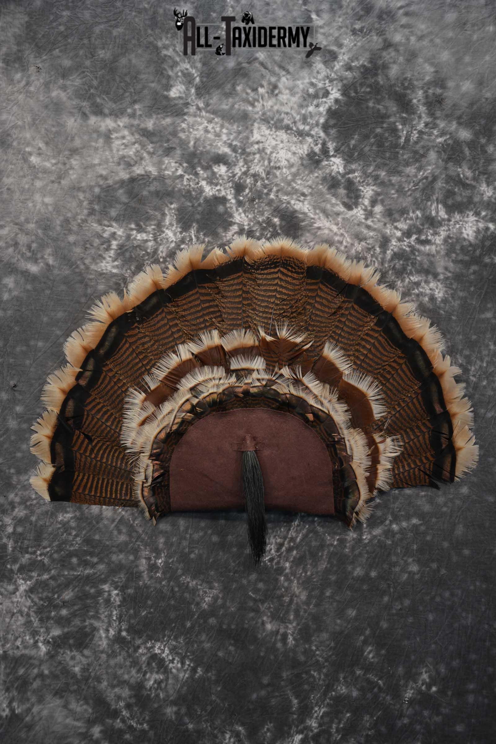 Rio Turkey Fan SKU 1715