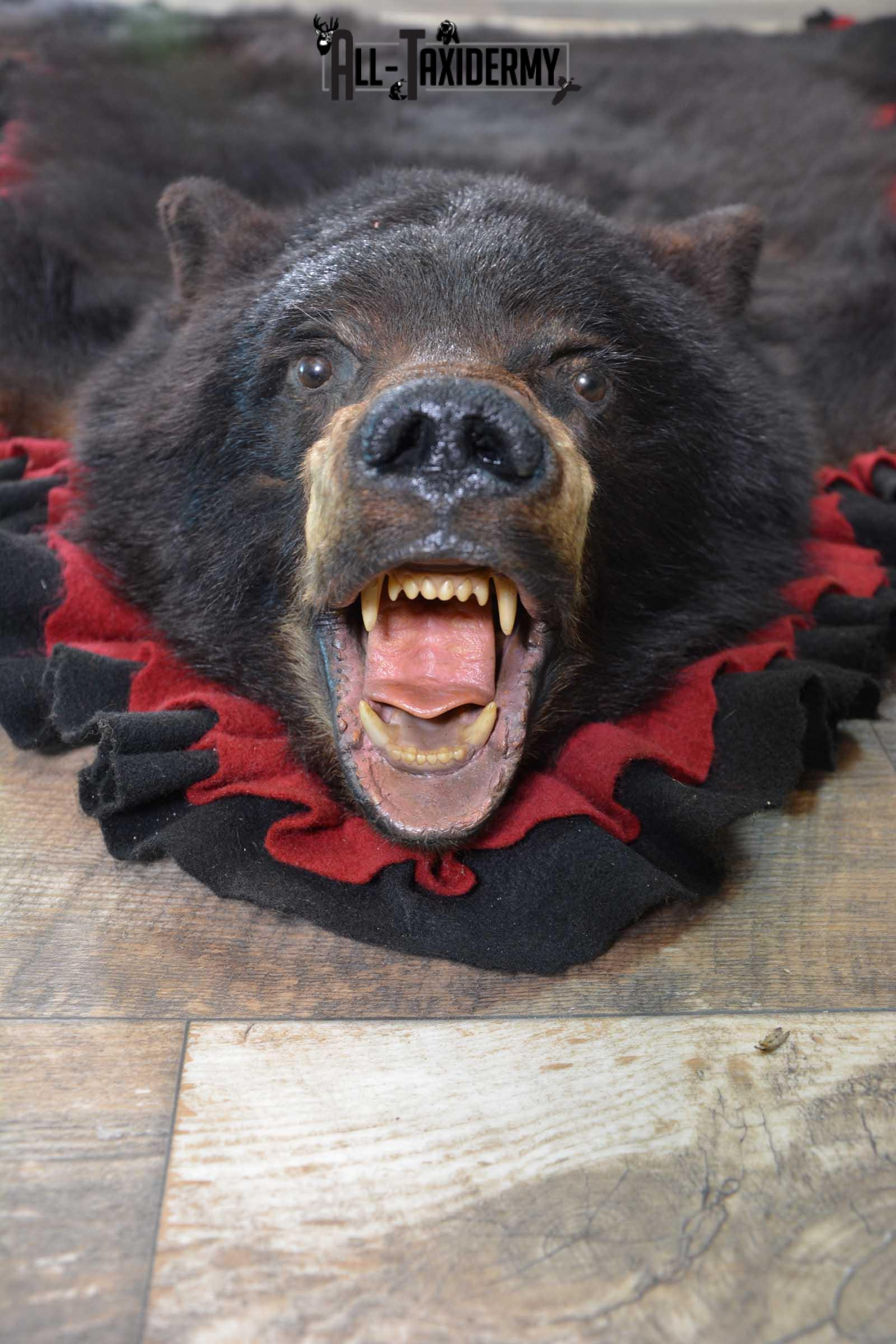Black Bear Taxidermy Rug for Sale SKU 1673