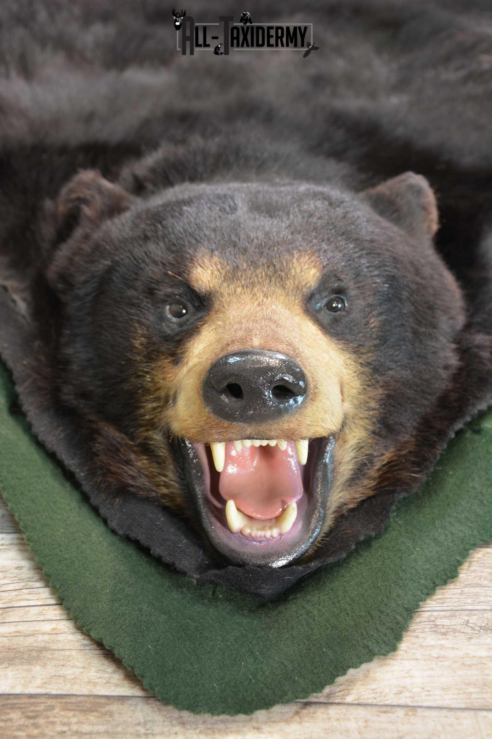 Black Bear Taxidermy Rug SKU 1740