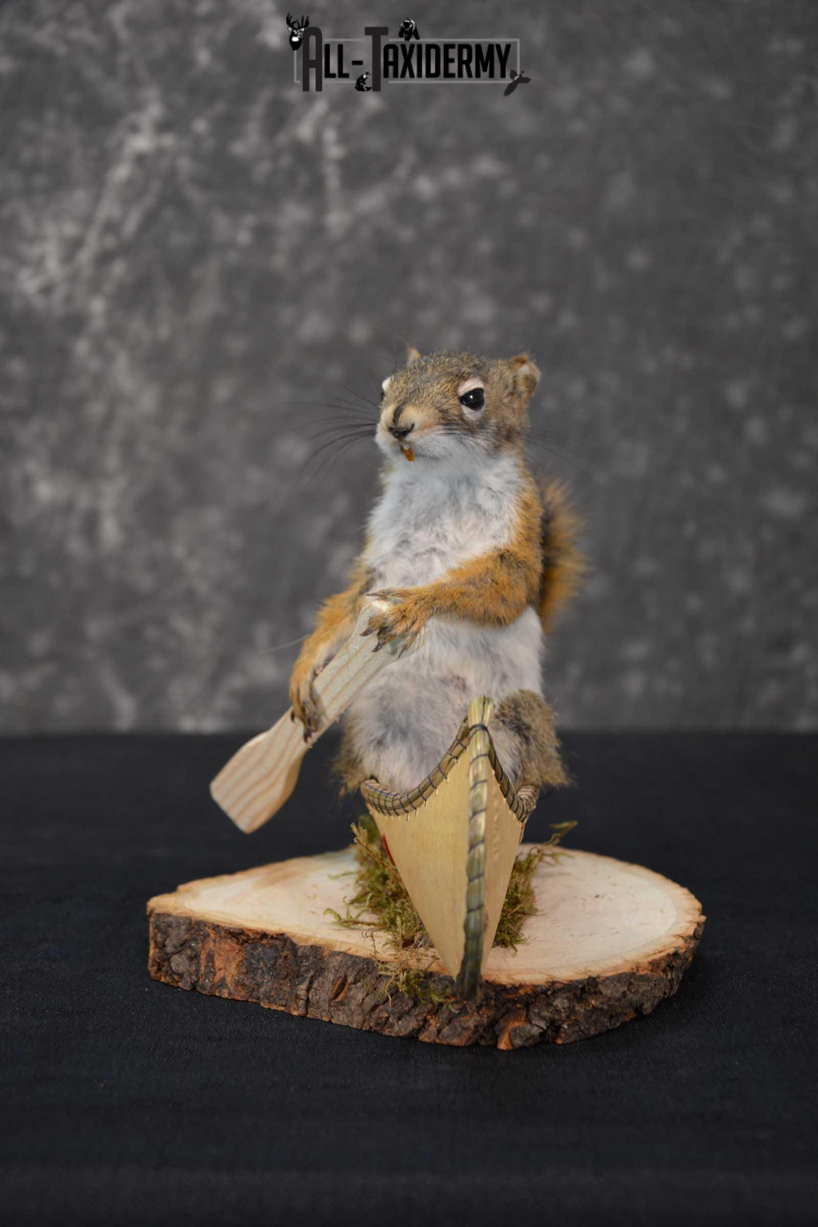 Red Squirrel in Canoe Taxidermy mount for sale SKU 1747