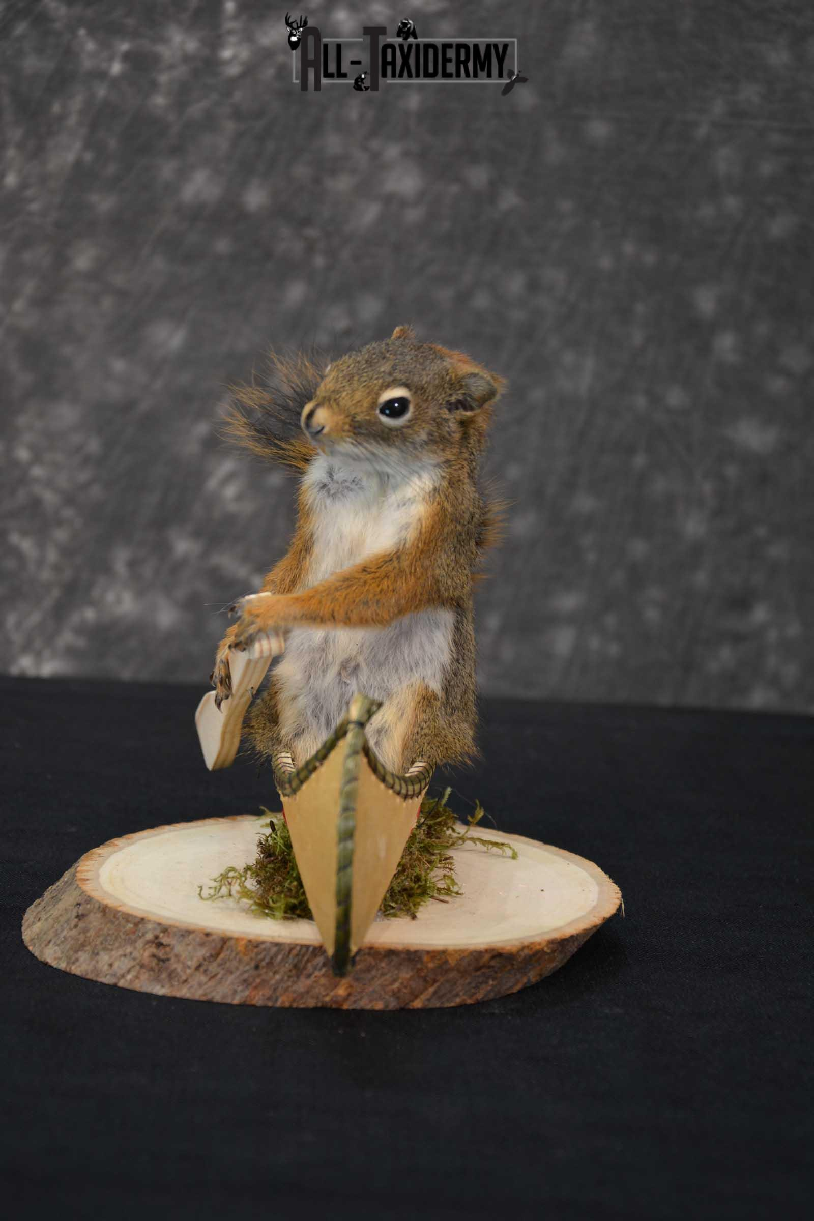 Red Squirrel in Canoe Taxidermy mount for sale SKU 1751