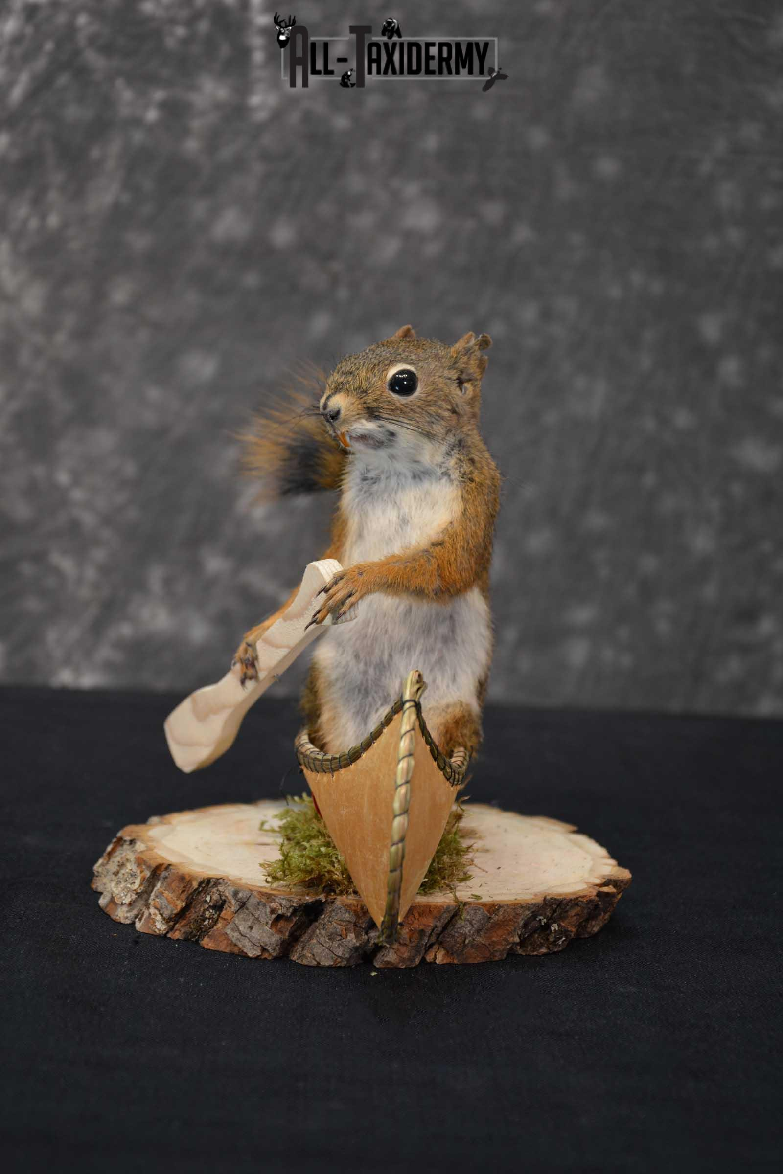 Red Squirrel in Canoe Taxidermy mount for sale SKU 1753