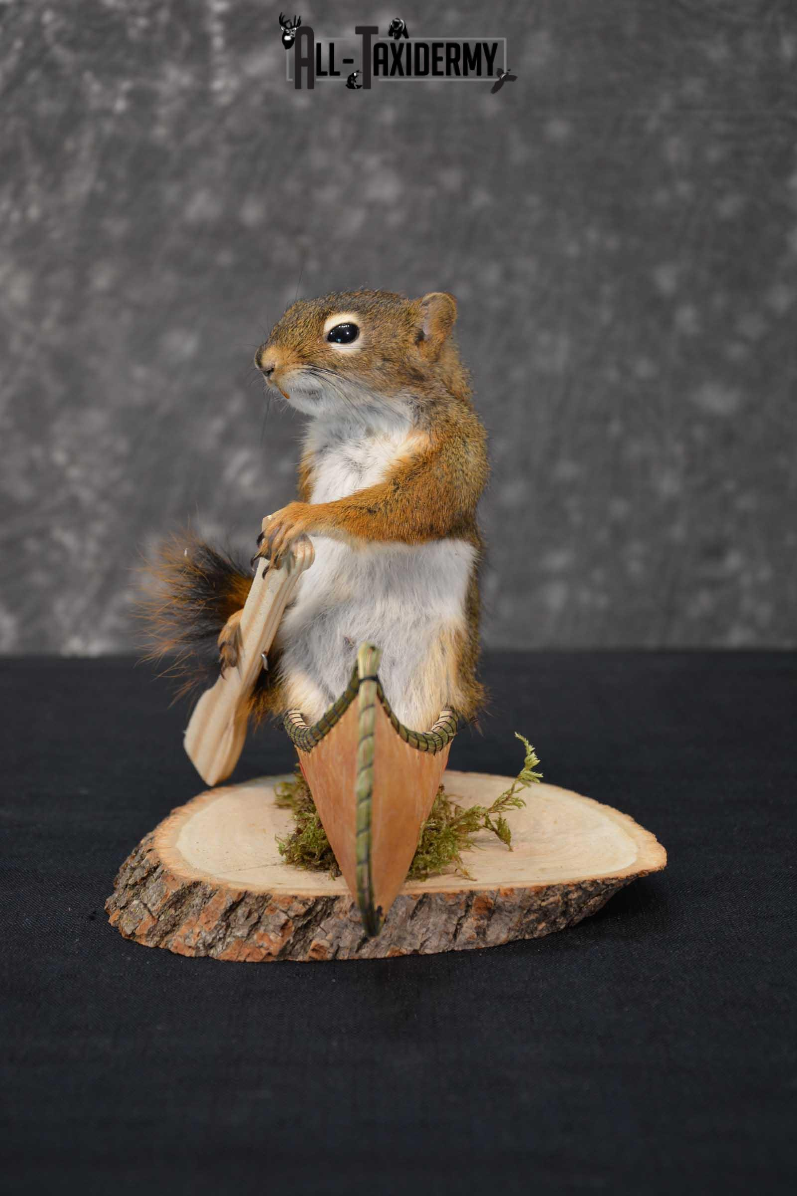 Red Squirrel in Canoe Taxidermy mount for sale SKU 1755