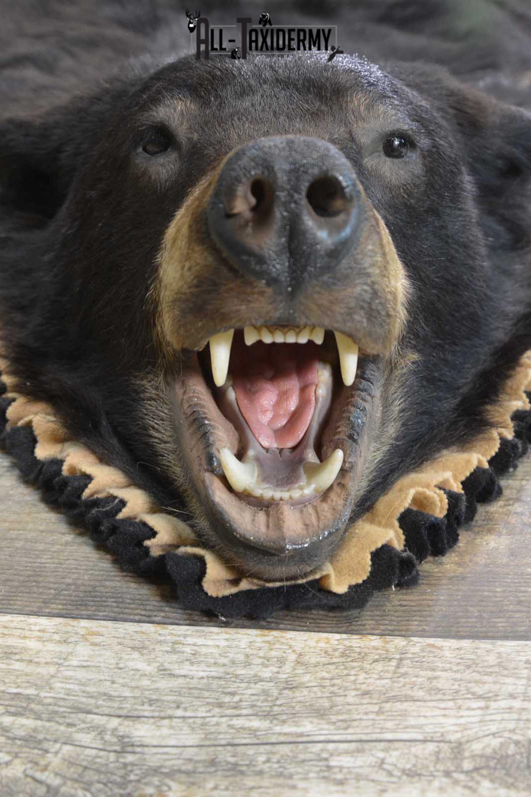 Black Bear Taxidermy Rug for sale SKU 1836
