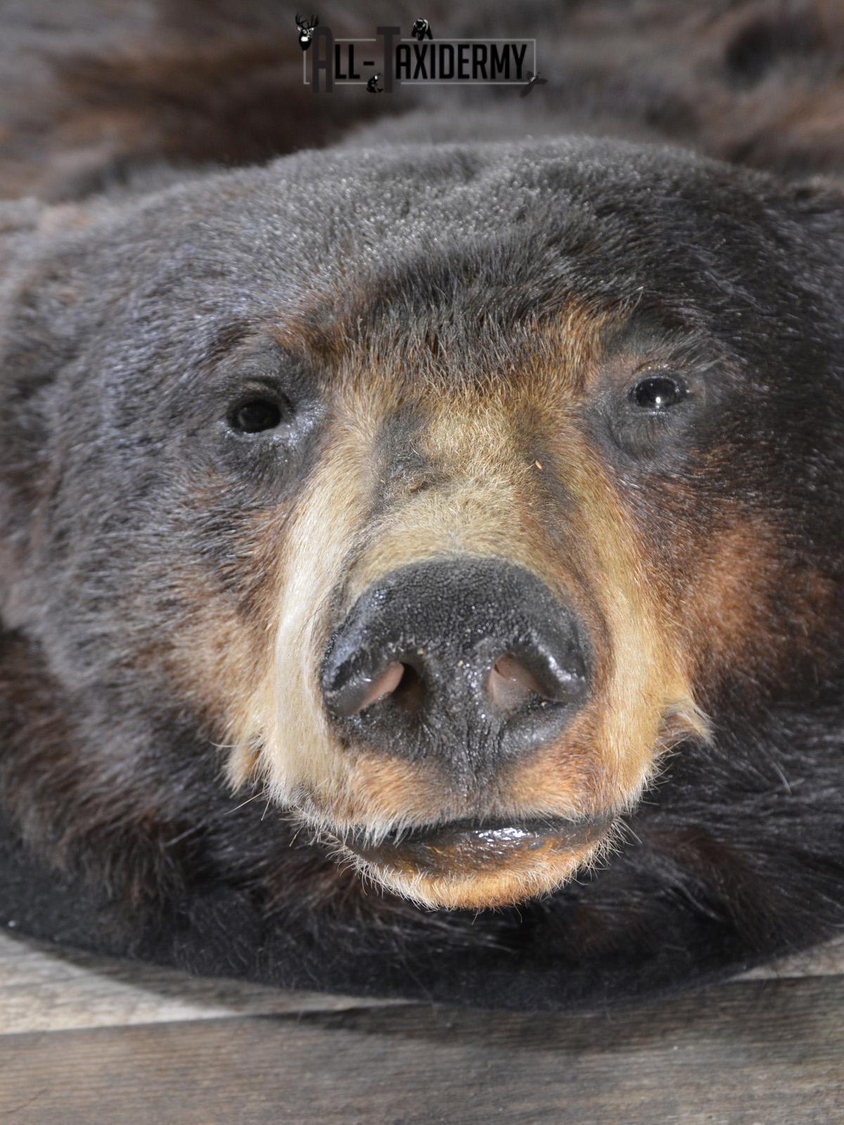 Black Bear taxidermy rug for sale SKU 1924